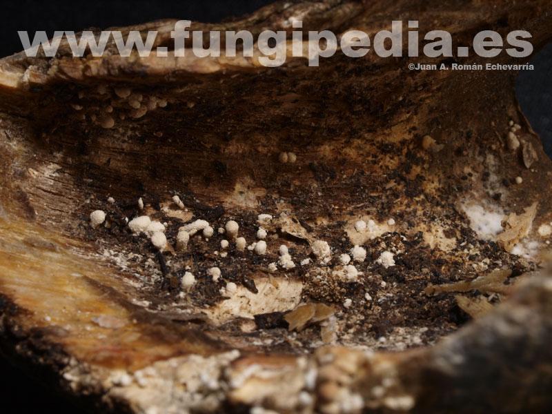 El hongo sobre las uñas que curar por que ungüento