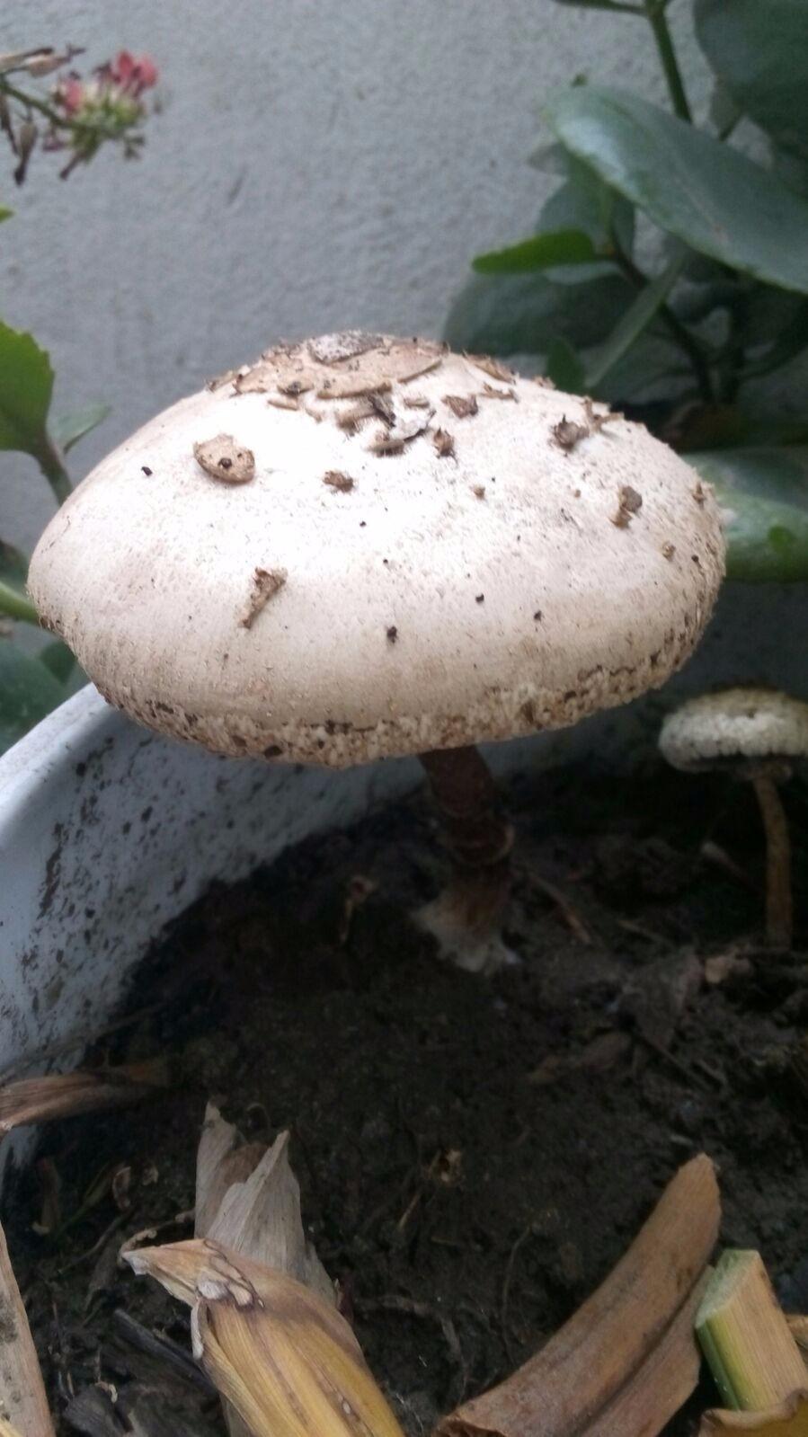Alguien sabe qué especie de hongo es este?