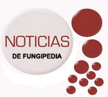 images/stories/noticias-fungipedia.jpg