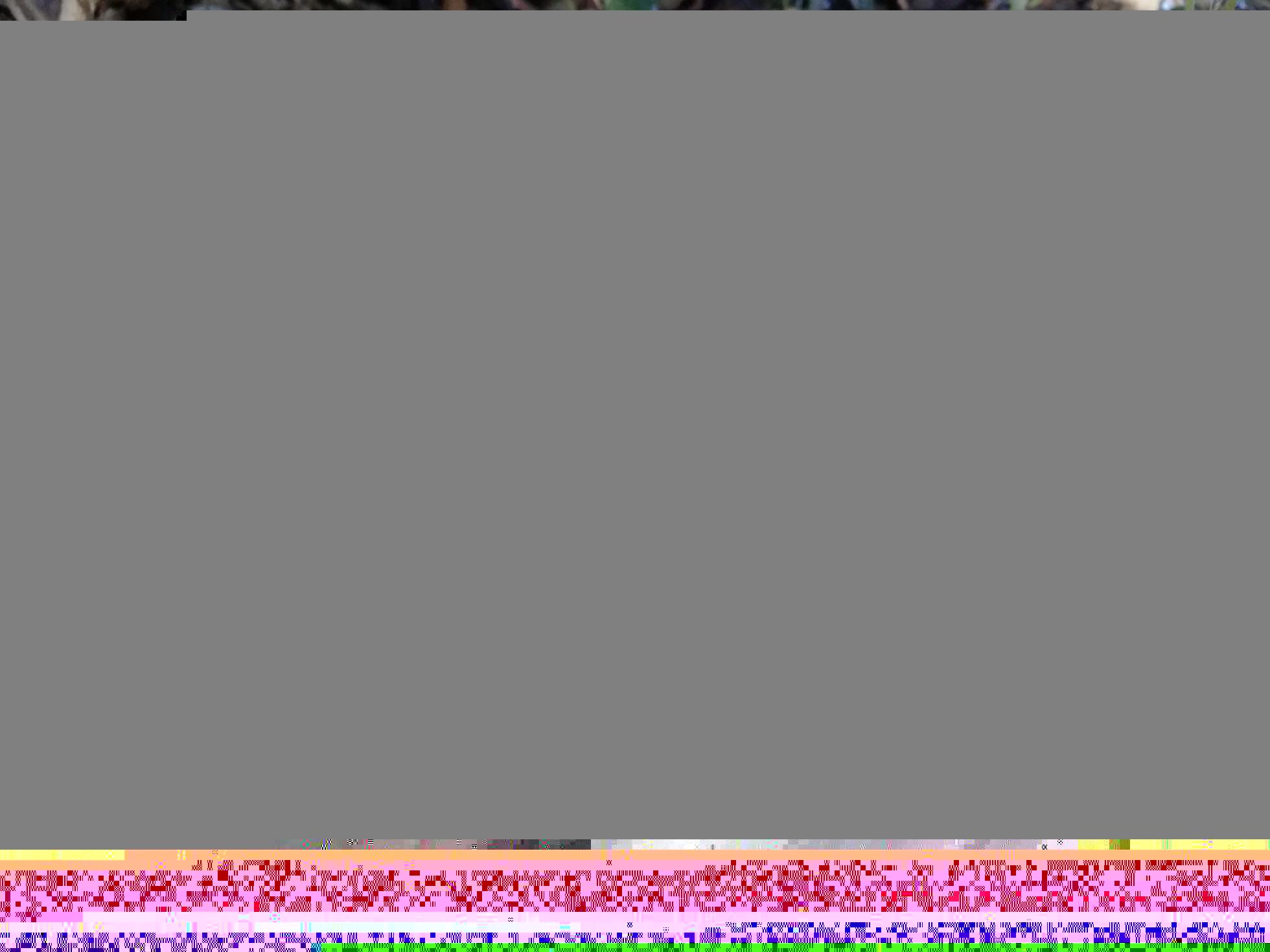 IMG_20181123_115847_2018-11-25-2.jpg