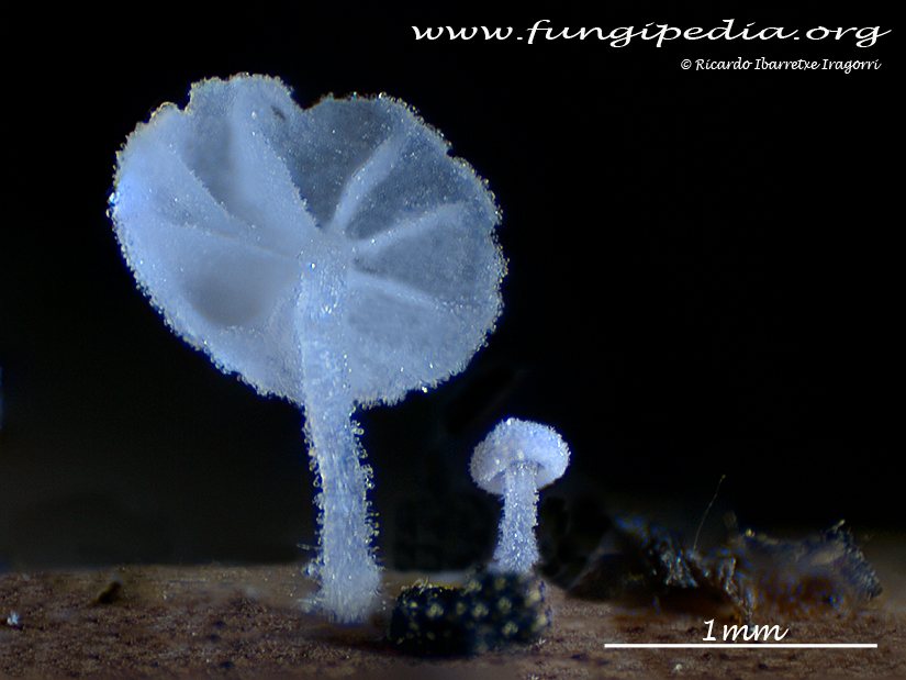 10a2_fungi.jpg