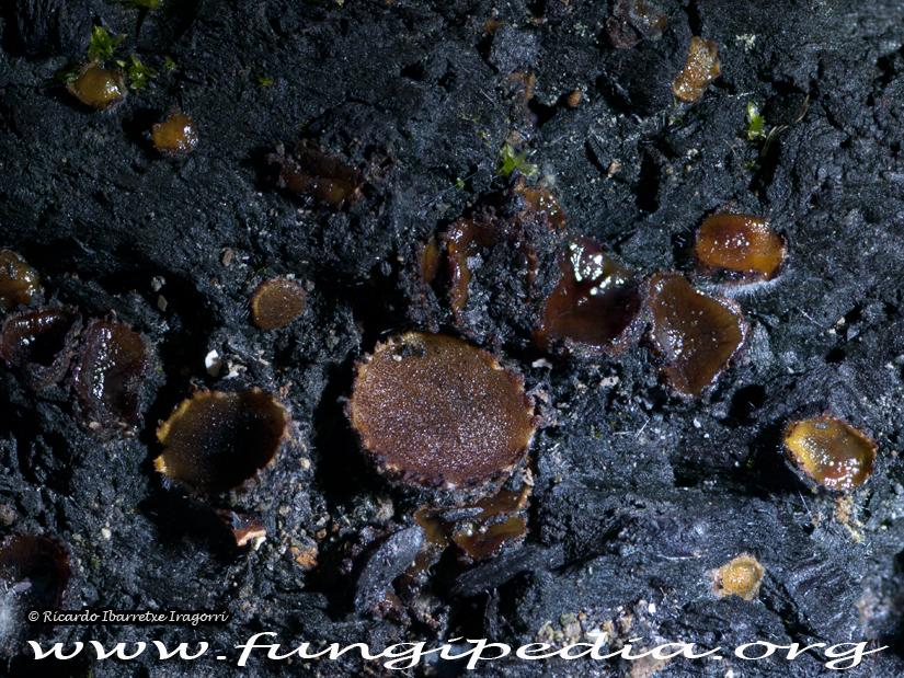 1_fungi_2014-06-23.jpg