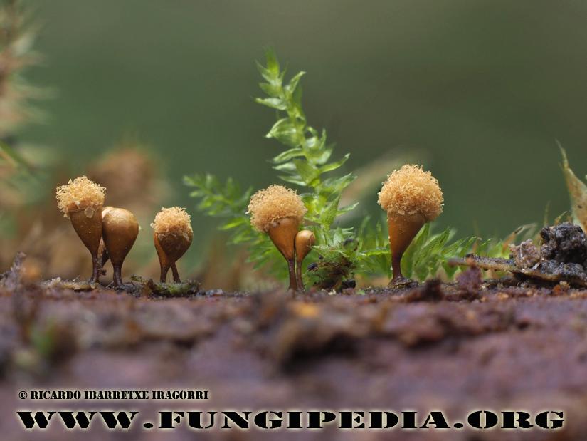 1a_fungi_2017-11-08-2.jpg