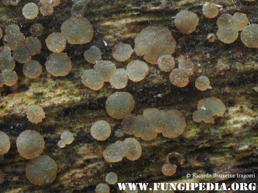 2_fungi_2017-07-17.jpg
