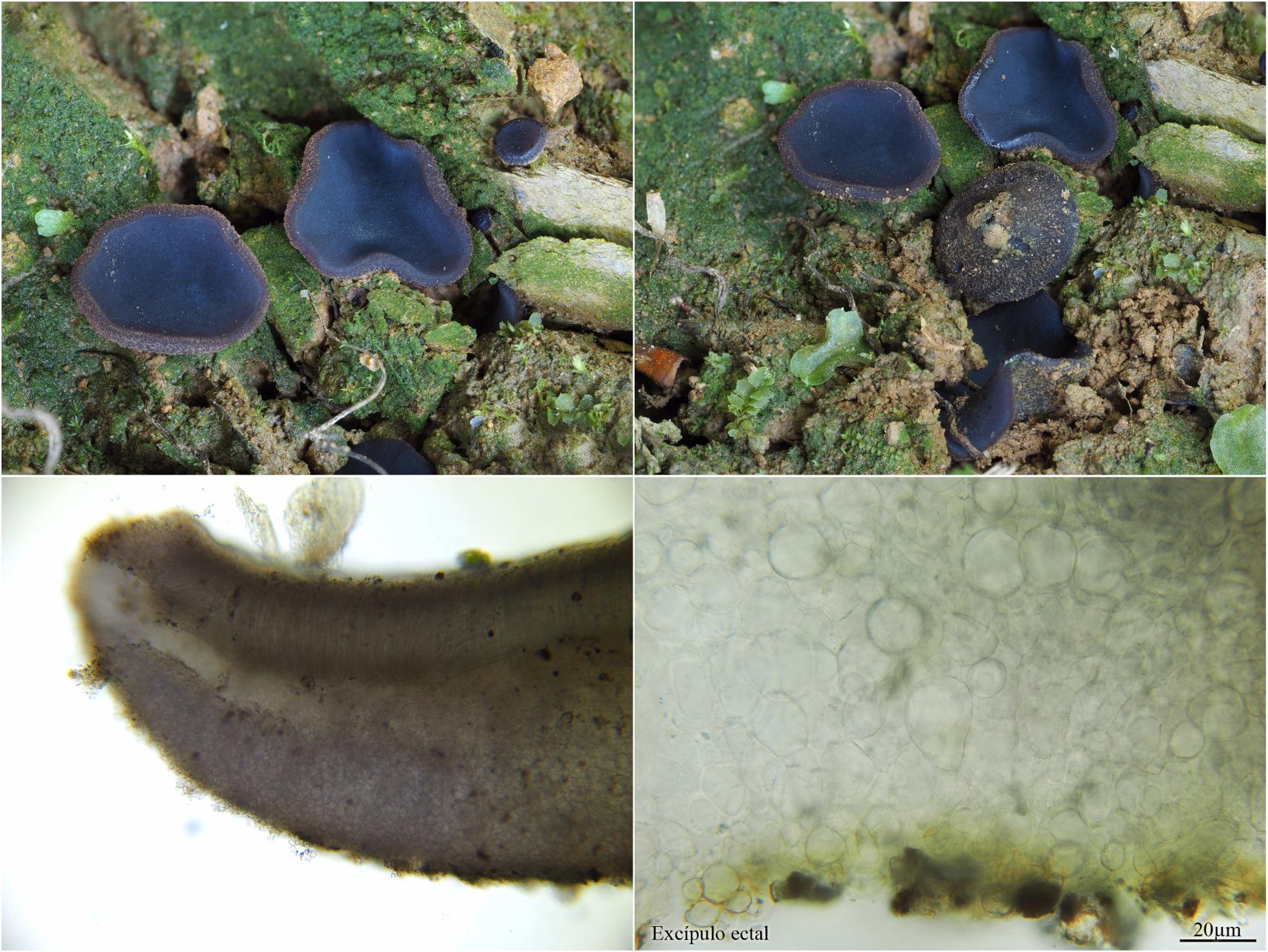 Ficha1_fungi.jpg