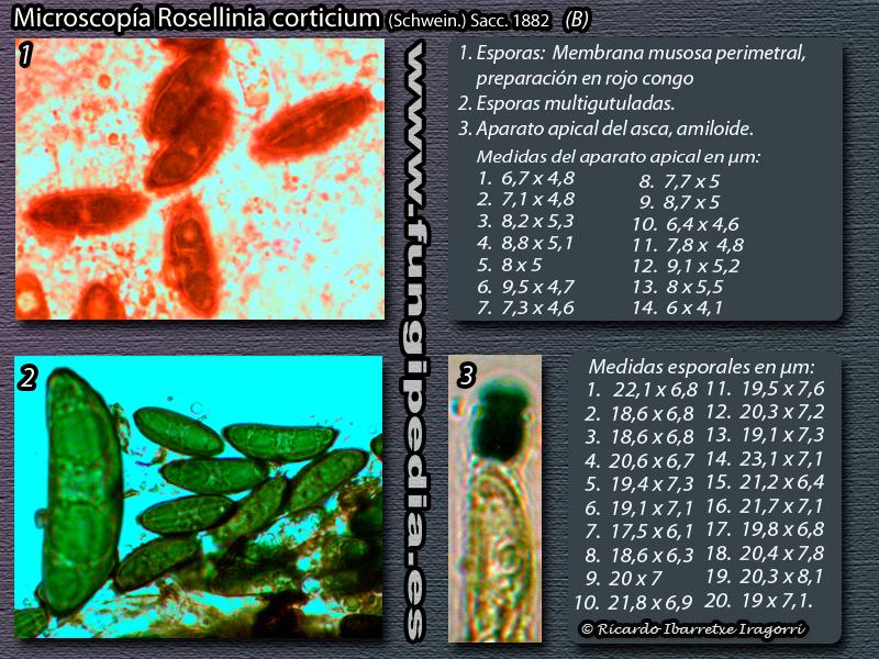 ficha-micro-2.jpg