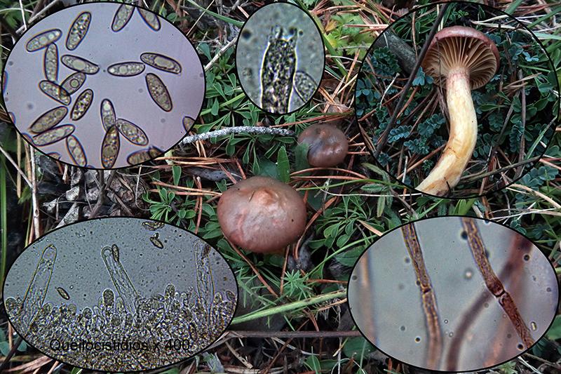 Chroogomphusrutilusp_2020-10-04-2.jpg
