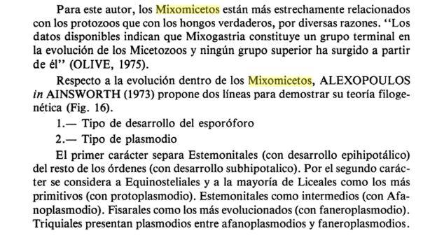 Mixomicetos2.JPG