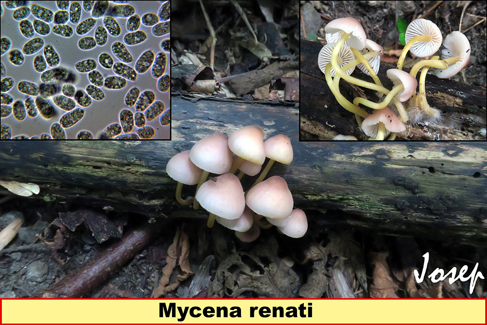Mycenarenati.jpg