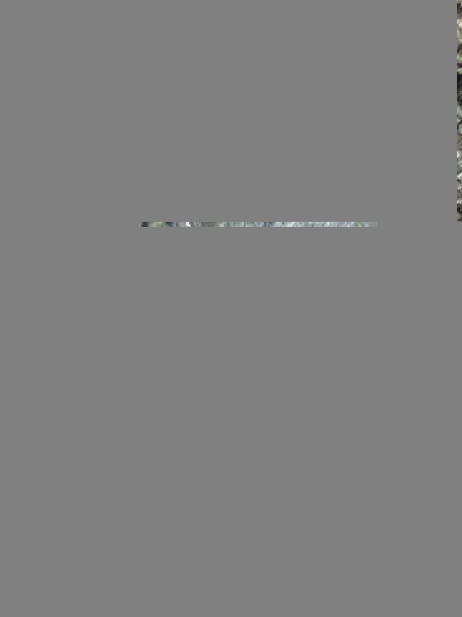 33930808-E6D4-4BE1-B936-AAA0F983E086.jpeg