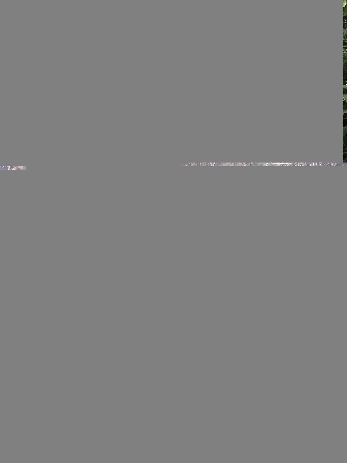 FFFCC713-DE07-4F69-9006-B43EBB860C7D.jpeg