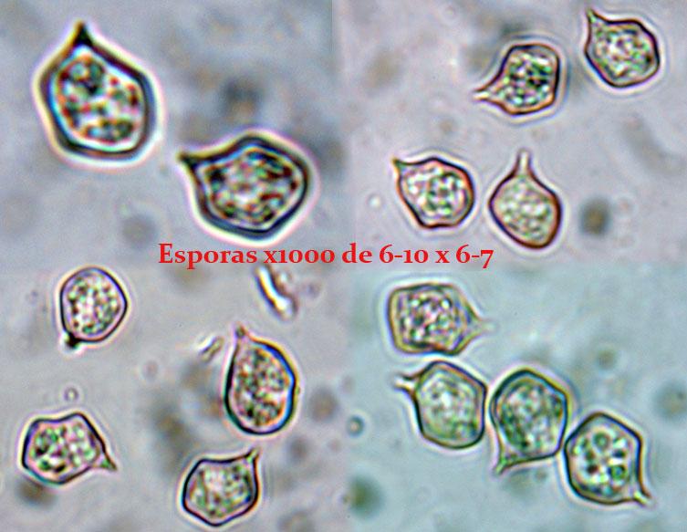 Esporas_2014-02-08-4.jpg