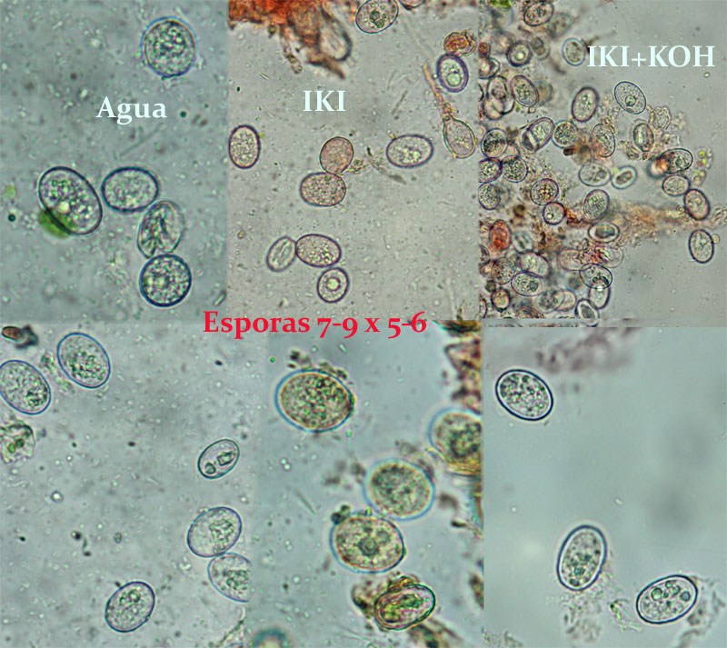 Esporas_2014-04-21-3.jpg