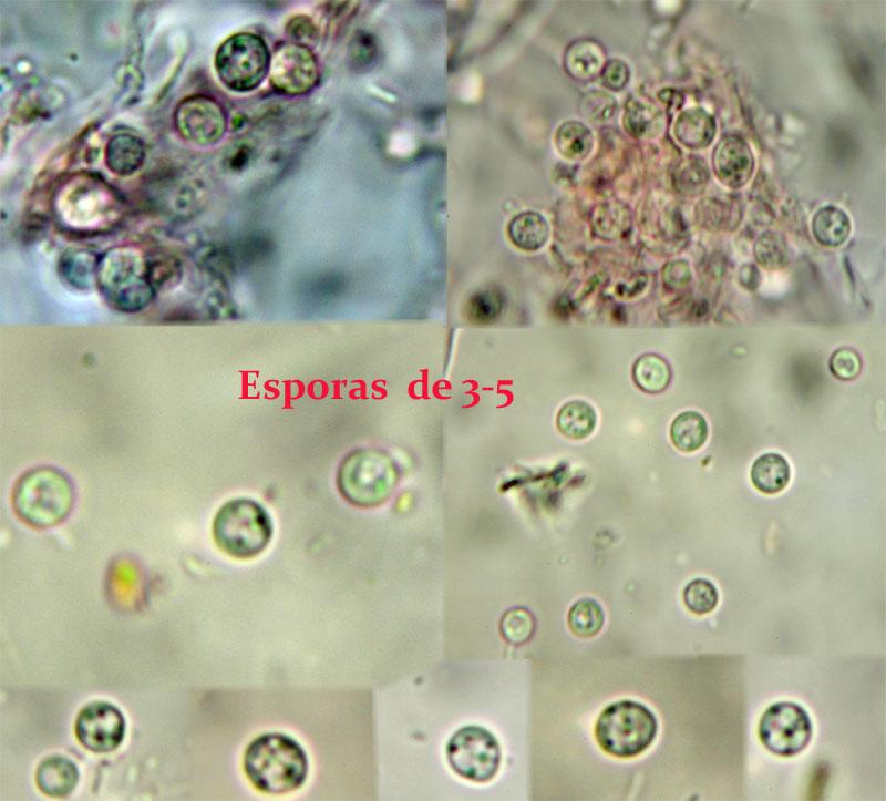 Esporas_2014-04-21.jpg