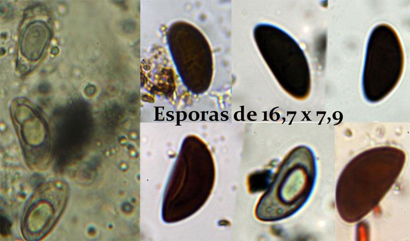 Esporas_2017-01-24.jpg