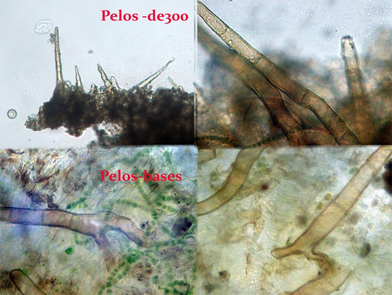 Pelos_2014-03-03.jpg