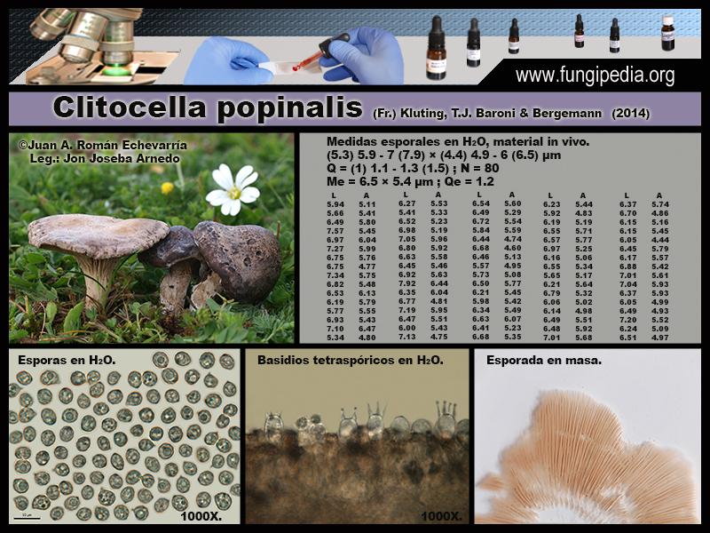 Clitocella_popinalis_Microscopia_Mycroscopy1_2020-09-29.jpg