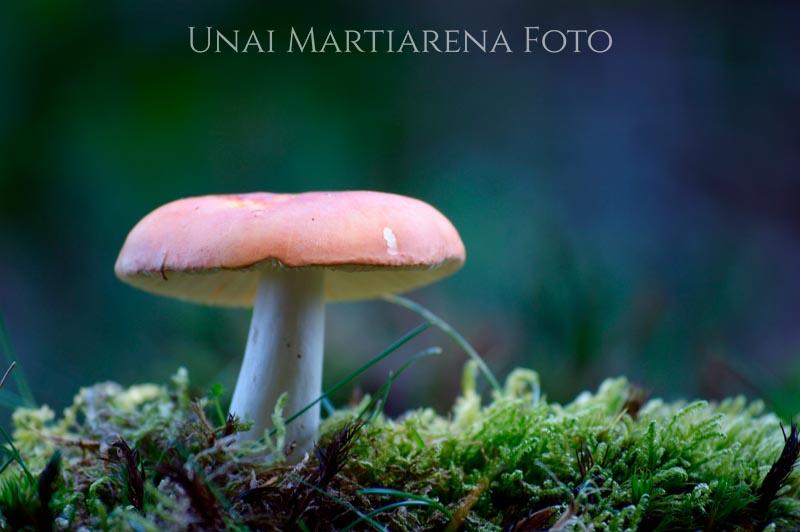 Russula_sp_001_2018-08-14-2.jpg