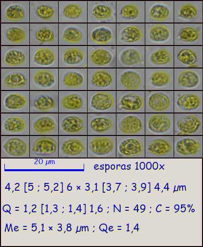 esporas1000x4376.pixi.jpg