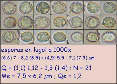 esporasenlugola1000x11.pixi.jpg